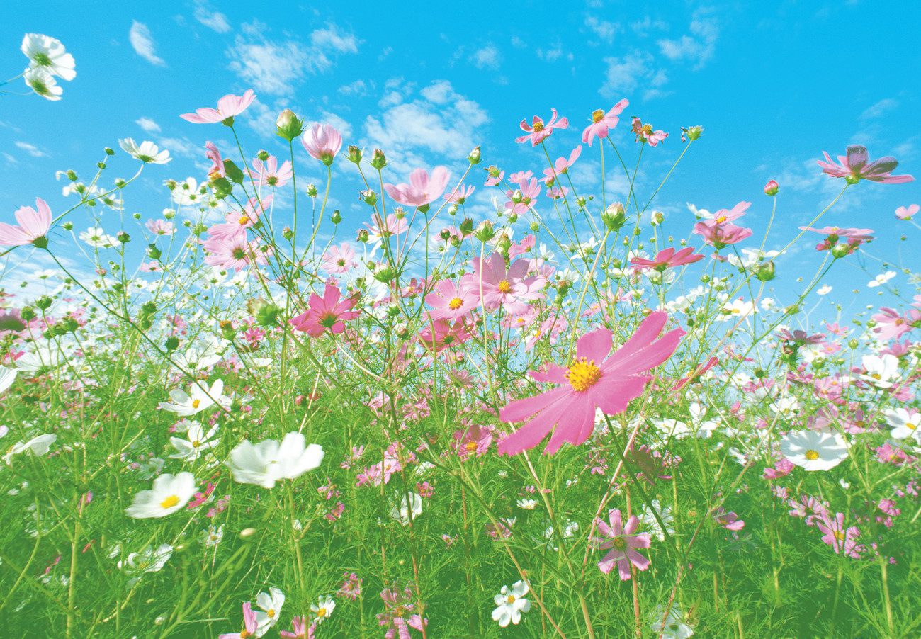 Flower meadow wall mural buy at europosters for Mural flower