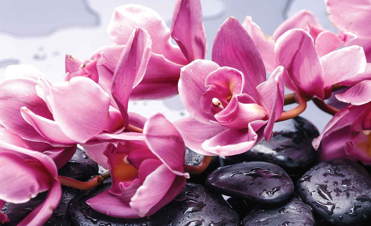 Flowers orchids stones zen wall paper mural buy at for Poster mural geant zen