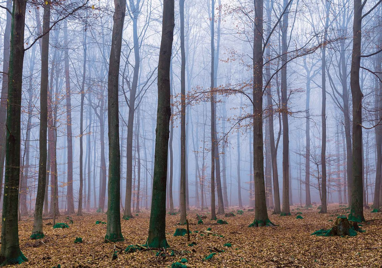 nature forest woods - photo #26