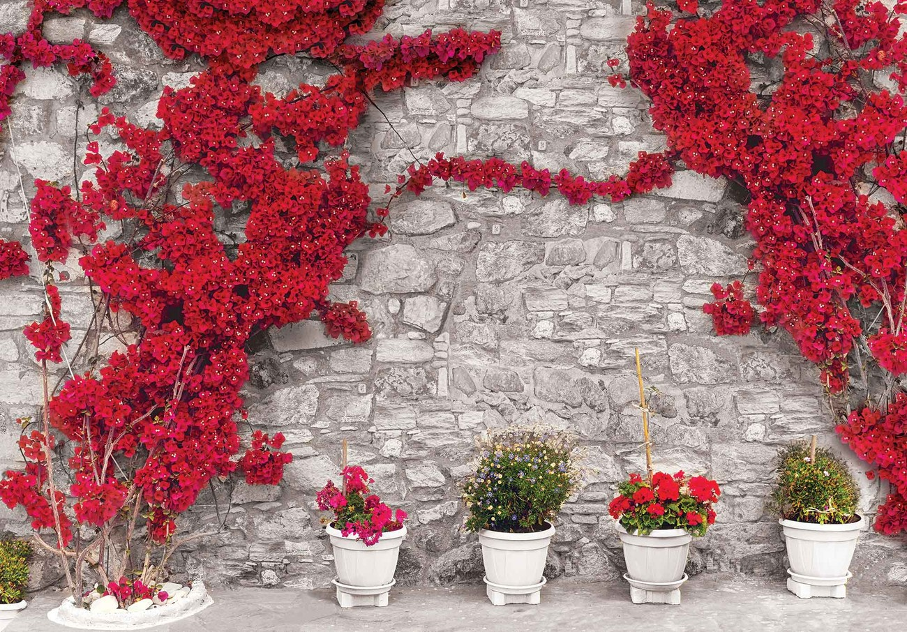 Red Flowers Stone Wall Wall Paper Mural Buy At Europosters