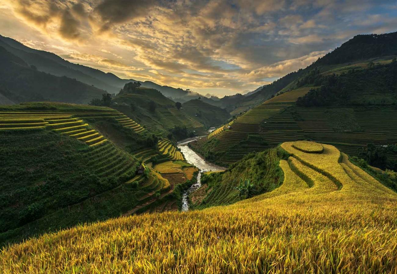 Rice Terrace In Vietnam Wall Paper Mural Buy At Europosters