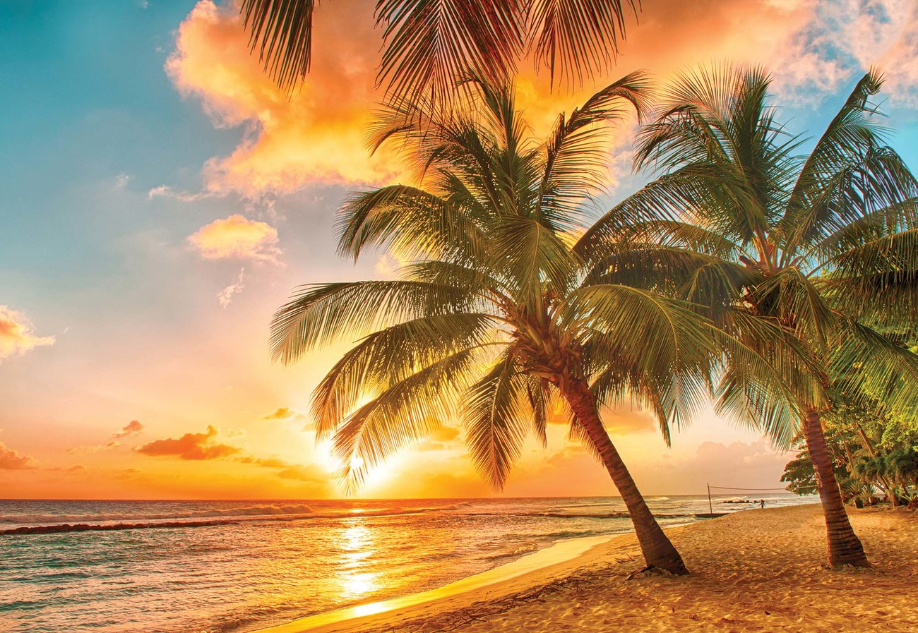 Tropical Beach Sunset Palm Trees Wall Paper Mural Buy At Europosters