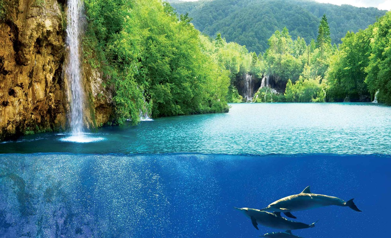 Waterfall sea nature dolphins wall paper mural buy at for Mural nature