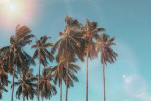 Palmupuut