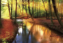 Metsä & Puut