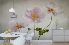 Wall murals for the kitchen