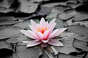 Flores & Plantas - Quadros de vidro