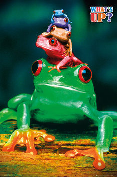 5 frogs Affiche