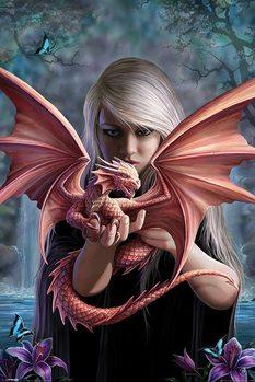 Anne Stokes - dragonkin Affiche