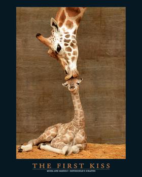 FIRST KISS Affiche