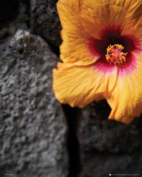 Fleurs - Stone Wall Affiche