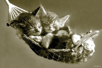 Keith Kimberlin - kittens in a hammock Poster