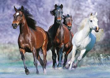 Les chevaux - Running, Bob Langrish Poster