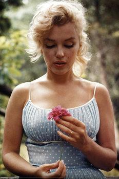 Marilyn Monroe - Flower Affiche