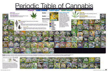 Periodic Table - Of Cannabis Affiche