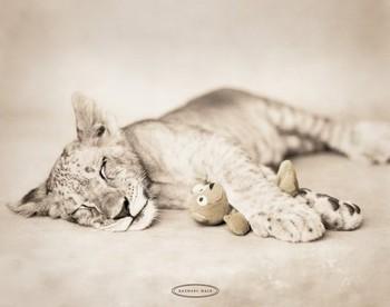 Rachael Hale - arjuna & teddy Affiche