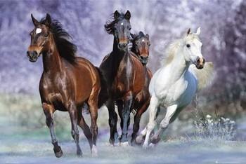 Running horses - bob langrish Affiche