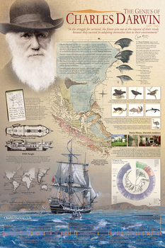 The genius of Charles Darwin Affiche