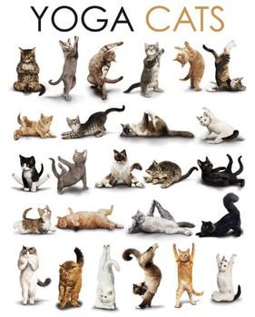YOGA CATS - compilation Affiche