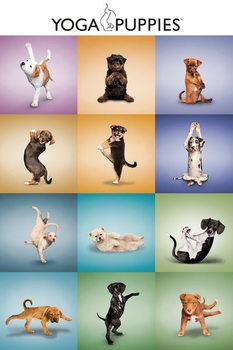 Yoga - Chiots Affiche