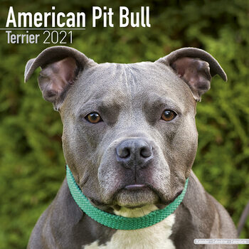 Calendar 2021 American Pit Bull Terrier