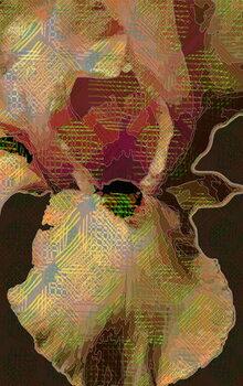 Fine Art Print Bearded  Iris