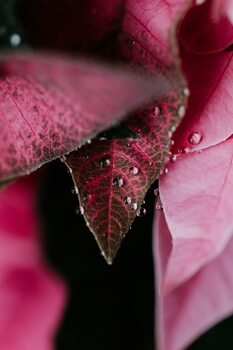 Art Photography Beautiful detail of pink flowers
