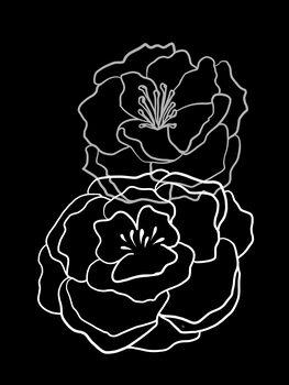 Illustration Black Poppies