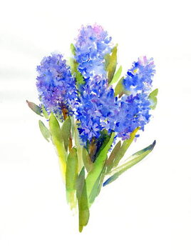 Fine Art Print Blue Hyacinth, 2014,