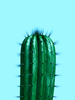 Illustration cactus1