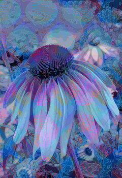 Fine Art Print Cone Flower