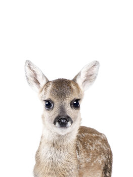 Taide valokuvaus Deer 1