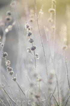 Arte Fotográfica Dry plants at winter