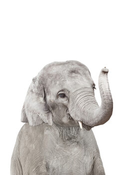 Taide valokuvaus Elephant 2
