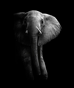 Art Photography Elephant!