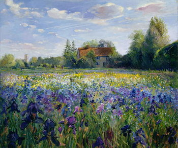 Fine Art Print Evening at the Iris Field