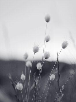 Taide valokuvaus Field Grass