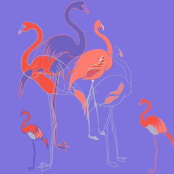 Fine Art Print Flamingoes