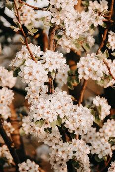 Arte Fotográfica Flower madness