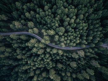 Art Photography From above
