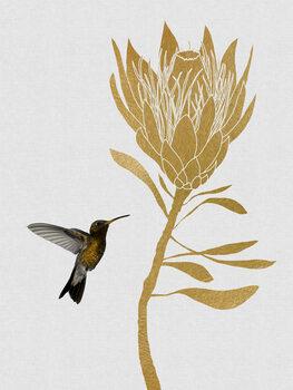 Illustration Hummingbird & Flower I