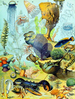 Fine Art Print Illustration of  an underwater scene  c.1923