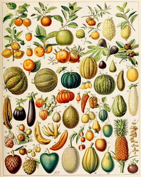 Fine Art Print Illustration of Fruit c.1923