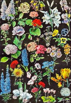Taidejuliste Illustration of garden flowers c.1923