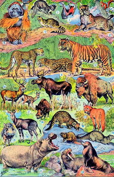 Fine Art Print Illustration of Wild Animals c.1923