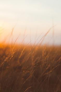 Taide valokuvaus Last sunrays over the dry plants