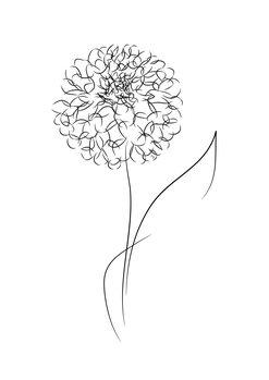 Illustration Line bloom