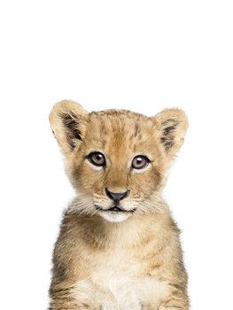 Art Photography Lion 1