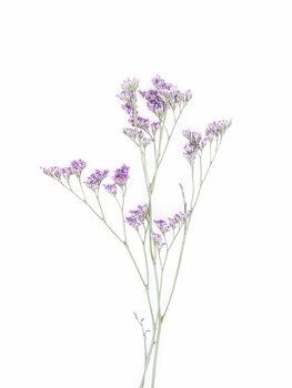 Taide valokuvaus Little Floral