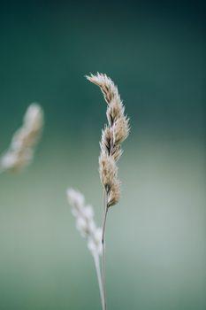 Taide valokuvaus Majestic dry plant